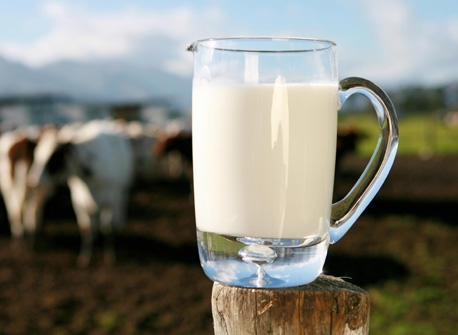 Dairy Facts & Fallacies